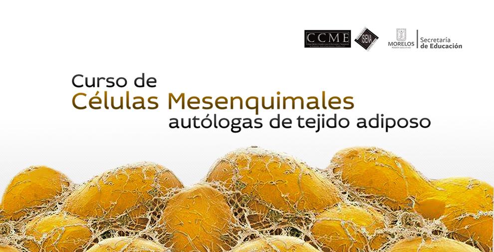 mesenquimales-cursos-cuernavaca