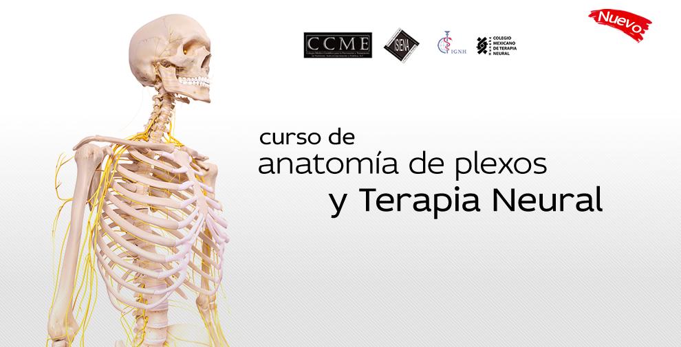 Curso de Anatomía y Terapia Neural